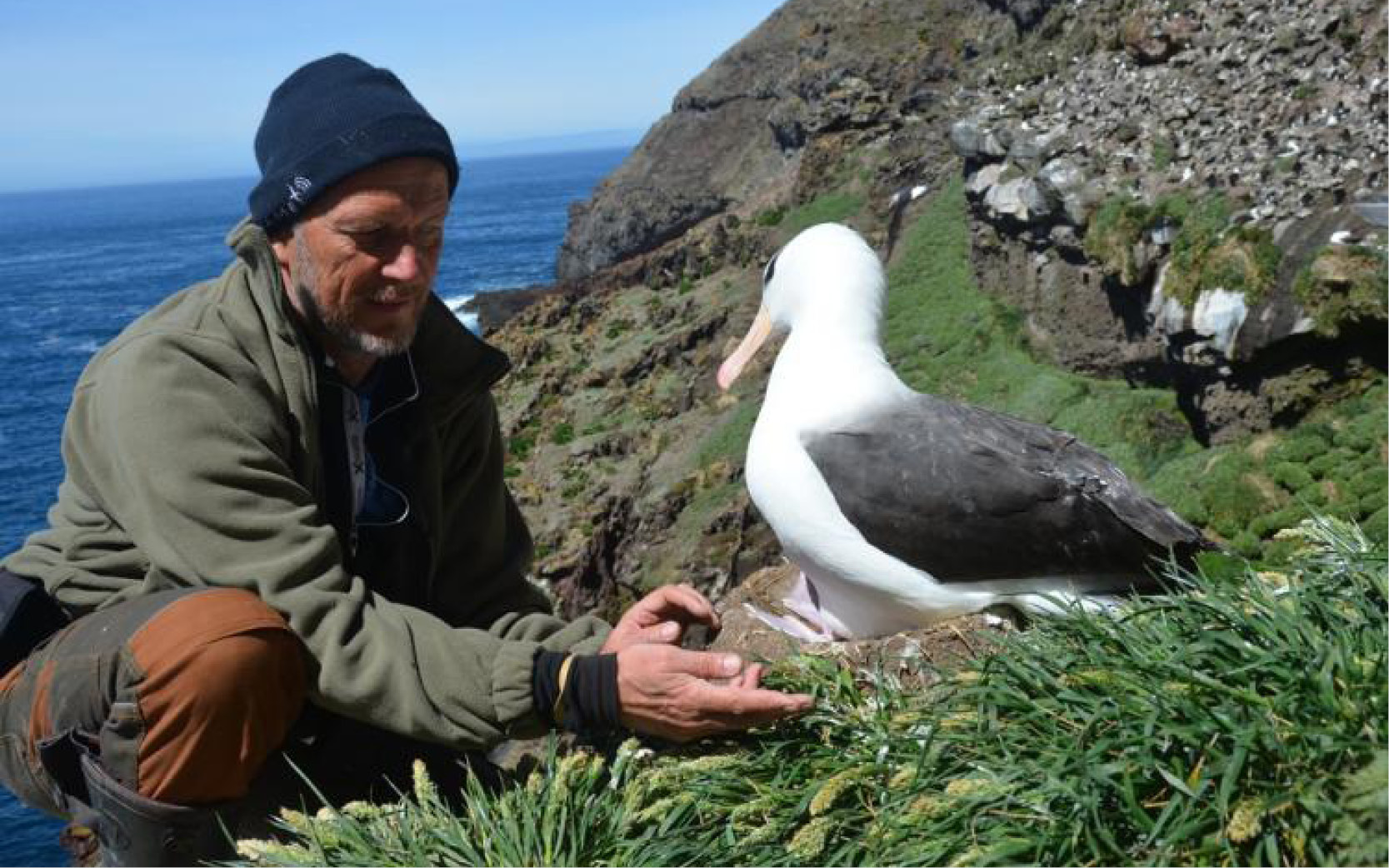 albatros argos tracking, argos PTT, albatros geolocation, wildlife geolocation