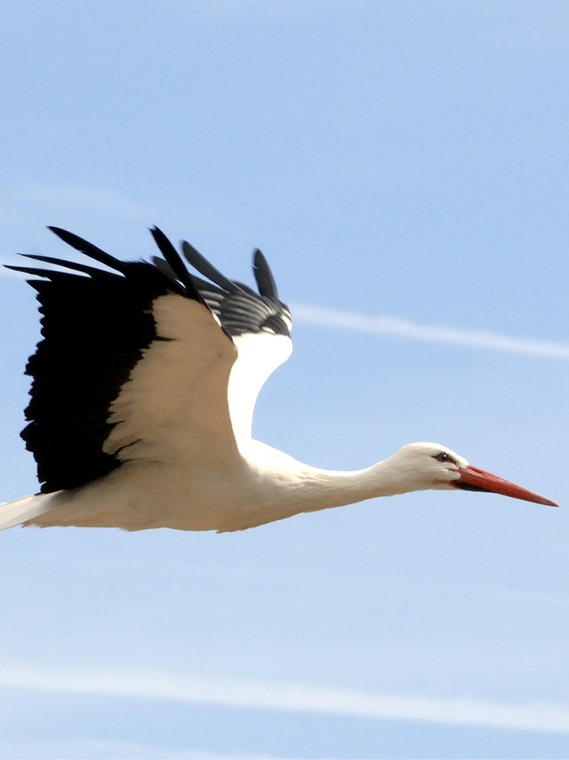 argos PTT, argos transmitter, argos tracking beacon, stork